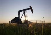 5 nước cắt quan hệ ngoại giao với Qatar, giá dầu bật tăng