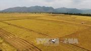 Tìm phương thức ưu việt về tích tụ ruộng đất - Bài 1: 'Cởi trói' hạn điền đã chín muồi