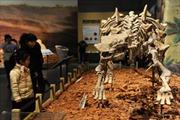Phát hiện thủ phạm khiến khủng long tuyệt chủng trên Trái Đất