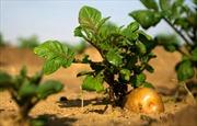 Trung Quốc dự định trồng khoai tây, nuôi tằm trên Mặt Trăng