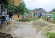 Thủy điện Tuyên Quang xả lũ, hơn 70 tấn cá trị giá 4 tỷ đồng bị nước cuốn trôi