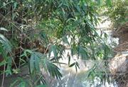 Vụ gây ô nhiễm nguồn nước suối ở Phú Thọ: Sẽ nâng cấp hệ thống xử lý nước thải