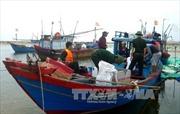 Kiểm tra, xử lý việc khai thác hải sản bằng chất nổ tại vùng biển Mũi Né
