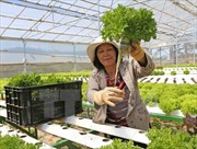 Chủ tịch Hội Nông dân: Đầu ra cho nông sản bị động do thiếu chính sách liên kết
