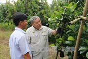 Giá cây giống ăn quả đặc sản tại Tiền Giang tăng mạnh
