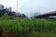 Đại lộ Thăng Long cỏ dại cao ngút đầu, ngổn ngang rác thải