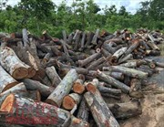 Đắk Lắk: Lâm tặc ngang nhiên phá rừng tại huyện Ea Súp