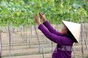 Nông nghiệp công nghệ cao khó phát triển, vì đâu?