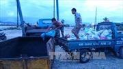 Khẩn trương làm rõ nguyên nhân cá chết trên sông Cổ Cò, Đà Nẵng