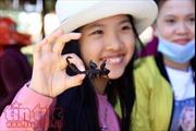 Khám phá chợ côn trùng đặc sản 'nhìn phát khiếp' ở đất nước Chùa Tháp