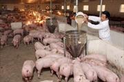Giá thịt lợn tăng - giảm chóng mặt, chưa nên vội vã tăng đàn