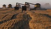 Lệnh cấm vận ba năm tác động thế nào lên nền nông nghiệp Nga?