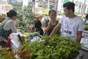 Học cách trồng rau sạch ở ngày hội Nông trại xanh
