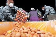 Chính phủ Hàn Quốc tiêu hủy tất cả số trứng bị nhiễm fipronil