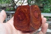Phát hiện nhập lậu gỗ Giáng hương nguồn gốc Tây Phi tại Hải Phòng