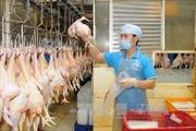 Việt Nam xuất khẩu lô thịt gà đầu tiên sang Nhật Bản