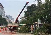 Chặt hạ, đánh chuyển 130 cây xanh trên đường Kim Mã