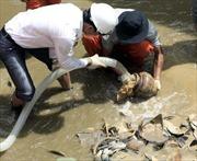 Quảng Ngãi bảo vệ cổ vật chìm đắm tại cảng Dung Quất