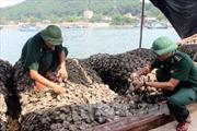 Bắt giữ hơn 10 tấn hàu giống nhập lậu từ Trung Quốc