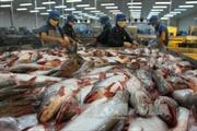 Thuế chống phá giá của Mỹ không ảnh hưởng đến xuất khẩu cá tra Việt Nam