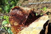 Liên tiếp xảy ra các vụ phá rừng đặc dụng tại xã Pá Khoang, Điện Biên