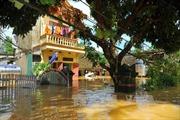 Lũ lịch sử sau 32 năm, Ninh Bình sơ tán gấp 200.000 dân