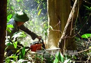 Phú Yên kiểm điểm tập thể, cá nhân sử dụng rừng, đất rừng sai mục đích