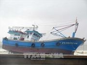 Hàng trăm tàu thuyền Phú Yên bị nhấn chìm, hư hại do ảnh hưởng bão số 12