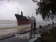Khẩn trương tìm kiếm các nạn nhân mất tích, trôi dạt trên biển do bão số 12