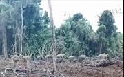 Đồng Nai xây hàng rào điện dài 50km bảo vệ voi rừng