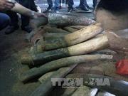 Tạm giữ 47 kg ngà voi chuyển qua đường bưu điện từ Đức về Việt Nam