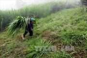 Rét đậm, rét hại xuất hiện ở vùng núi cao Điện Biên