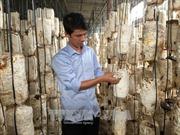 Làm giàu và tạo việc làm cho nhiều lao động từ trồng nấm