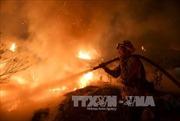 Cháy rừng tại Mỹ thiêu rụi diện tích bằng cả thành phố Chicago