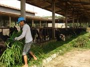 Ngành nông nghiệp ĐBSCL thích nghi với biến đổi khí hậu