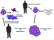 Liệu pháp mới: điều trị HIV/AIDS bằng tế bào gốc của chính bệnh nhân
