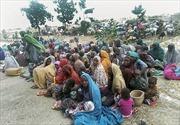 700 con tin tự trốn thoát khỏi cầm tù của Boko Haram
