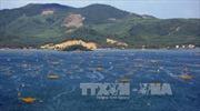 Quy hoạch tổng thể phát triển Khu du lịch quốc gia Vịnh Xuân Đài và Phong Nha - Kẻ Bàng