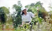 Mục sở thị vườn hoa tam giác mạch ngay giữa Sài Gòn