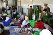 Thanh Hóa thu giữ gần 300 kg nội tạng động vật bốc mùi hôi thối
