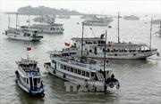 Quảng Ninh kiên quyết đình chỉ tàu du lịch vi phạm trên vịnh Hạ Long