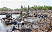 Cà Mau xử lý tình trạng phá rừng bãi bồi để nuôi sò huyết