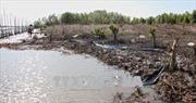 Vụ phá rừng để nuôi sò huyết tại Cà Mau: Đề nghị kiểm điểm Chủ tịch xã Rạch Chèo