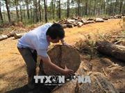 Vụ phá rừng ở Đắk Nông: Khởi tố, bắt giam một đối tượng