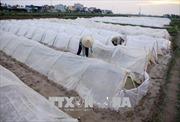 Quảng Ninh ứng phó với thời tiết rét đậm, rét hại