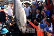 Ngư dân Phú Yên phấn khởi với chuyến biển đầu năm