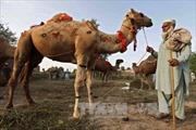 Ra mắt sản phẩm sữa công thức đầu tiên trên thế giới từ sữa lạc đà