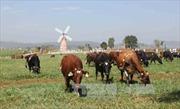 Phát triển nông nghiệp hữu cơ - Bài 2: Vẫn còn lỗ hổng
