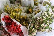 Nhiều loại hoa mới, lạ phục vụ ngày Quốc tế Phụ nữ 8/3