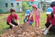 Công viên Hoà Bình sẽ trở thành vườn hoa anh đào lớn nhất Thủ đô